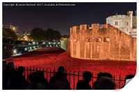 Poppies at the Tower of London, Print