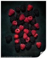Blackberries & Raspberries, Print