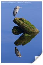 Great Blue Reflection, Print