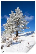 Frost Covered! , Print