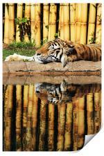 Tiger, Tiger, Print