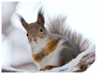Squirrels posing, Print