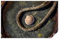 Shell and Rope, Print