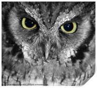 Screech owl, Print