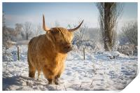 Highland Cow in the snow, Print
