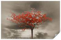 Autumn Red, Print