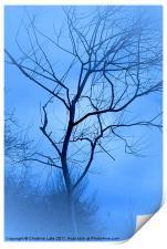 A shade of Blue, Print