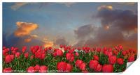 Forever Tulips, Print