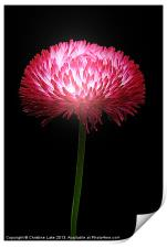 Clover Red, Print