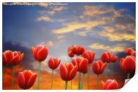 Tulip Sunset, Print