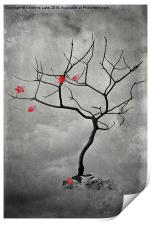 Natures Song, Print