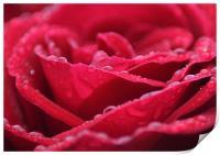 Deep Red, Print