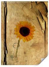 Sunflower, Print