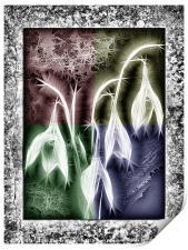 Crystal Snowdrops, Print