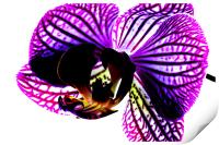 Orchid, Print