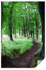 Tree Walk, Print
