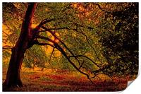 Branches, Print