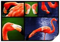 Pink Flamingos, Print