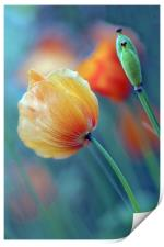 Natures Colours, Print