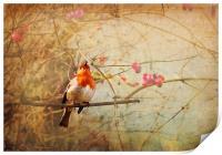 Vintage Songbird, Print