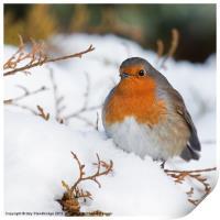 Robin in snow, Print
