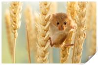Harvest mouse in wheat stalks, Print
