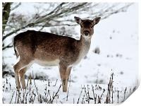 Deer in Wintertime, Print