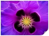 Poppy in Lilac, Print