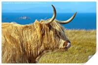 Highland Beauty Highland Cow, Print