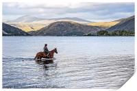 Horse at Airds Bay Loch Etive, Print