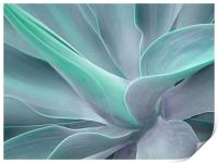 Agave Attenuata Abstract, Print