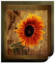 Sunflower Framed, Print