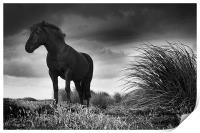 Equus, Print