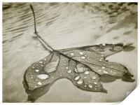 floating leaf (sepia), Print