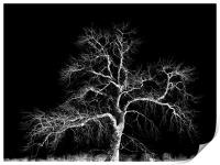 winter tree, Print