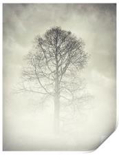 the winter tree, Print
