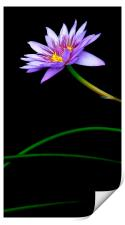 thoroughly modern lily, Print