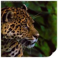 Panther profile, Print
