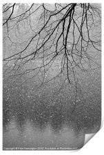 Snow and tree., Print