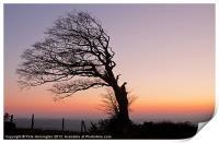 Lone half a tree!, Print