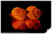 Illuminated Sea shells, Print