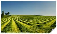 Grass lines, Print