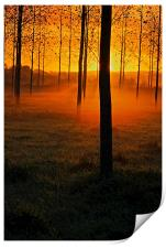 Sunrise through the Trees, Print