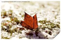 Last Autumn Leaf Standing in First Snow of Winter , Print