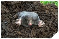 I Am A Mole, And I Live In A Hole!, Print