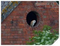 Barn Owl, Print