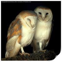 Barn Owl Love, Print