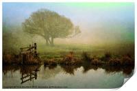 Misty Morning Glory, Print