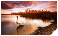 Swan On The Lake, Print