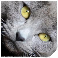 Look into my Eyes . . ., Print